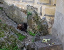 Český Krumlov - medvěd u zámecké věže