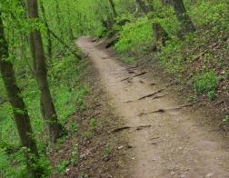 CHKO Český kras - lesní cesta k Solvayovým lomům