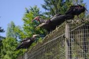 Cumberland Wildpark - volně žijící (nebo že by uniklo?) ptactvo