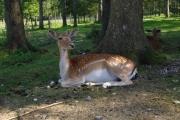 Cumberland Wildpark