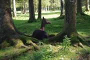 Austria - Cumberland Wildpark Grünau