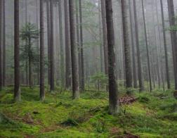 Šumava - forest near Devils lake (Čertovo jezero)