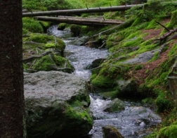 Šumava - one of the many streams