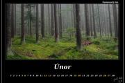 Únor - Les na Šumavě