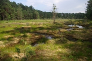 Máchovo jezero a okolí - NPP Swamp