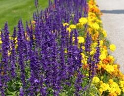 Flora v Hofgartenu