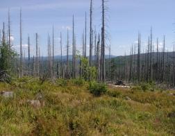 Šumava - výhled z Třístoličníku