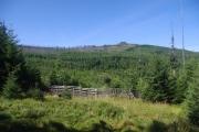 Šumava - pohled na Třístoličník