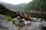 Čertovo jezero - skrytá kamera :-)