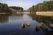 Nový jizbický rybník