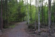 Cestou k Jívovému rybníku