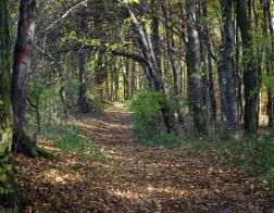 Česká republika - les u moravského krasu