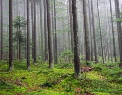 Česká republika - Šumava, les nedaleko Černého jezera