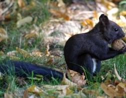 Česká republika - veverka v parku :-)