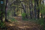 Moravský kras - cesta k Punkevním jeskyním