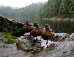 Šumava - Čertovo jezero