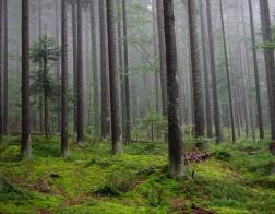 Šumava les v mlze