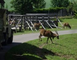 Zoo Dvůr Králové - Venkovní safari