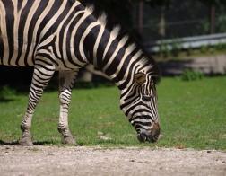 Zoo Dvůr Králové -