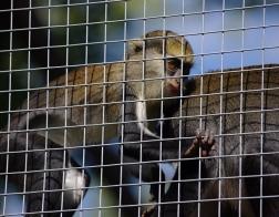 Zoo Dvůr Králové - Pavilon opic