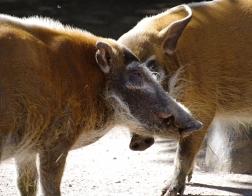 Zoo Dvůr Králové