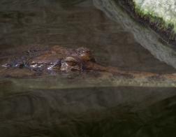 Zoo Dvůr Králové - Pavilon krokodýlů