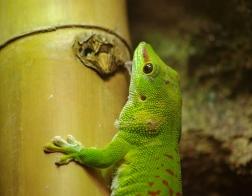 Zoo Dvůr Králové - Pavilon plazů