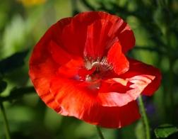 Zoo Dvůr Králové - Nechybí zde ani okrasná květena